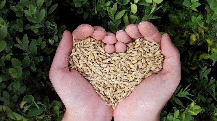 agricultura biodinamica biologica